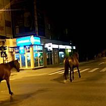 Noaptea caii pun stapanire pe centrul orasului Arad